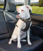 Impact Seatbelt Harness