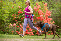 Springback Dog Leash 48