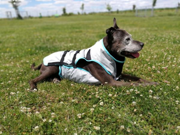 Kühlweste Dry cooling Vest