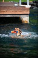 Chuckit! Amphibious Bumper